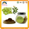 Chinese Herbs Senna Leaf Extract for Lose Weight