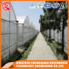 China Multi Span Poly Film Commercial Agricultural Greenhouse