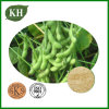 Natural Soybean Lecithin Phosphatidylcholine 21% by HPLC