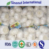 Jinxiang Fresh Garlic Crop 2019