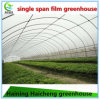 Commercial Tunnel Plastic Strawberry Greenhouse for Sale