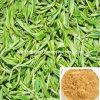 98% Green Tea Extract (98% Polyphenols; 50% Catechin)