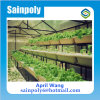 Low Price Easily Installed Plastic-Film Greenhouse for Agricultural