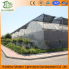 Commercial Multi Span Plastic Film Green House for Vegetable Growing