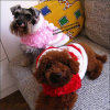 Two Colors Christmast Waistcoat for Dogs