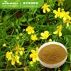 Cat Claw Extract / Cat′s Claw Extract Anunculus Ternatus Extract Hapagoside