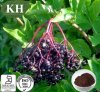 Elderberry Extract, Sambucus Nigra Extract, Anthocyanidins 3% ~ 25%