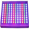 600W RGB LED Flood Light with DMX Dali System