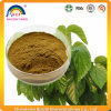 Mulberry Leaf Extract for Blood Sugar Disease