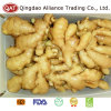 Export Standard Fresh Chinese Fat Ginger