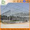 Hot Sale Multi Span Glass Greenhouse