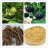 Pure Siberian Ginseng Extract Eleutherosides B + E 0.8%-1.5% HPLC, 100% ID, Low Contaminants of Aflatoxin, PAHs, Non-Irradiation