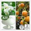 Natural Sweetner Neohesperidin Dihydrochalcone (NHDC)