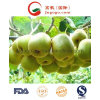 New Crop Fresh Kiwi Fruit for Sale From China