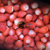 New Crop IQF Frozen Honey Strawberry