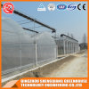 China Multi Span Coldframe Plastic Film Flowering Greenhouse