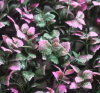 Artificial Purple Leaves Outdoor Hedge (MZ188004B)
