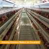 Tianrui Design H Frame 8 Tiers Automatic layer raising Chicken Cage