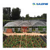 Excellent Service Commercial Tunnel Greenhouse for Agricultural Equipment