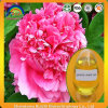Peony Seed Oil with Alpha Linolenic Acid