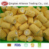 New Crop Frozen Sweet Corn Cobs with Good Price