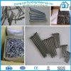 Common Nail Concrete Nail Roofing Nail (ZL-CN)