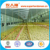 Good Designed Automatic Poultry Equipment for Broiler
