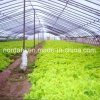 Wide Span Plastic Film Greenhouse for Hydroponic System
