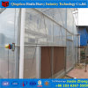 Multispan Agricultural Film Green House for Tomato