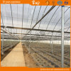 Po Film Multi-Span Greenhouse with Sunshade Net