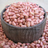 New Crop Peanut Kernels From Shandong Guanghua