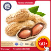 Chinese Factory Import Prices of Raw Peanut in Shell
