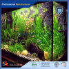 Decorative and Clear or Colourful Plexiglass Fish Tank with High Transparency