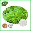 Artemisia Annua Extract Artemisinin Oil 99%