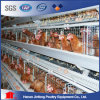 H Type Jinfeng Poultry System for Layer Farm / Automated Chicken Cage for Big Poultry Farm
