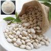 White Kidney Bean P. E.