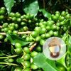 Weight Loss Green Coffee Bean Extract