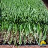 China Artificial Grass Artificial Lawn Natural Plastic Grass Mat From China