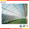 Ten Years Warranty Polycarbonate Sheet for Greenhouse Panels