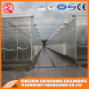 Agricultural Venlo Galvanized Steel Frame Polycarbonate Green House