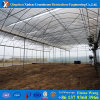 Film Cover Greenhouse with Hydropodnic System