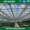Multi-Span Venlo Polycarbonate Sheet Commercial/Venlos Green House PE Plastic Film Greenhouse for Agriculture/Crop/Corn/Tomato/Flowers/Farming