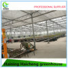 Commercial Greenhouse Bench for Polycarbonate Greenhouse