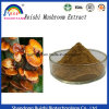 Pure Natural Herbal Ganoderma Lucidum Extract/Reishi Mushroom Powder