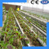Hydroponic Culture System of Nutrient Solution