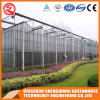 Hot Galvanized Steel Greenhouse with Flowers