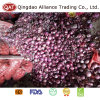 Top Quality Fresh Purple Onion with Good Price