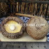 Smooth Shiitake Mushrooms Sale with Low Price