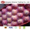 Good Price New Crop Fresh FUJI Apple
