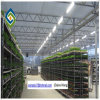 Hydroponics Greenhouse Tunnel Plastic Film Green House for Tomato